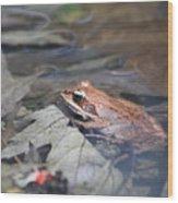 Wood Frog  Wood Print