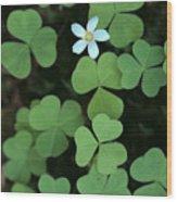 Wood Sorrel Flower Wood Print