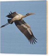 Wood Stork 1 Wood Print
