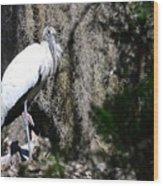 Wood Stork And Moss Wood Print