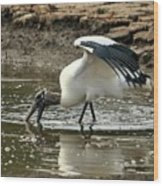 Wood Stork Fishing Wood Print