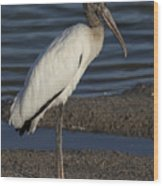Wood Stork In The Final Light Of Day Wood Print