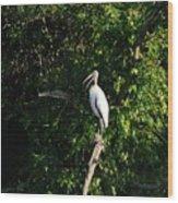Wood Stork-out On A Limb Wood Print