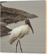 Wood Stork Walking Wood Print