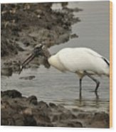 Wood Stork With Fish Wood Print