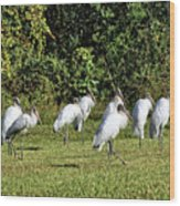 Wood Storks 2 - There Is Always One In A Crowd Wood Print