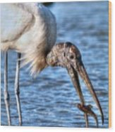 Wood Storks Breakfast Lunch And Dinner Wood Print
