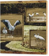 Wood Storks Of Oak Grove Island Wood Print