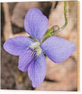 Wood Violet - Full View Wood Print