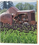 Woodburn Oregon - Tractor And Field Of Tulips Wood Print