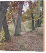 Wooded Entrance Wood Print
