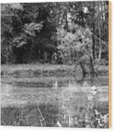 Wooded Pond Wood Print