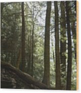 Wooded Serenity Wood Print
