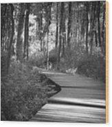 Wooded Walk Wood Print