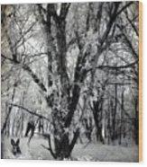 Woodland Fluff Wood Print