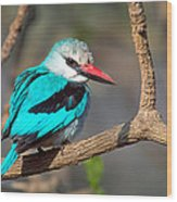 Woodland Kingfisher Halcyon Wood Print