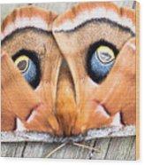 Woodland Moth Wood Print