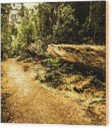Woodland Nature Walk Wood Print