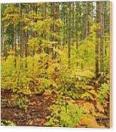 Woodland Panorama Wood Print