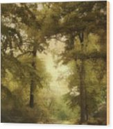 Woodland Passage Wood Print