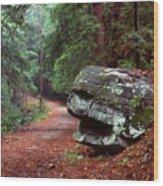 Woodland Path Naugatuck State Forest Wood Print