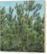 Woodland Pines Wood Print