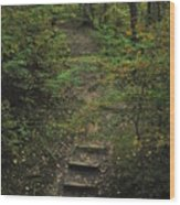 Woodland Steps Wood Print