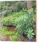 Woodland Stream Forest Interior Wood Print