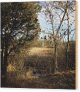 Woodland View  Wood Print