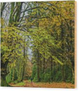Woodland Walks #1 Wood Print