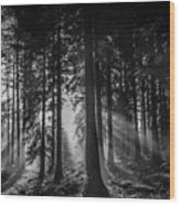 Woodland Walks Silver Rays B/w Wood Print