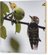 Woodpecker. Dendrocopos Minor Wood Print