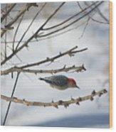 Woodpecker Diver Wood Print