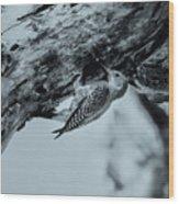 Woodpecker - El Salvador Wood Print