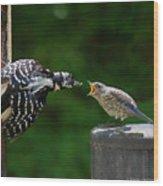 Woodpecker Feeding Bluebird Wood Print