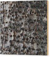 Woodpecker Holes In The Apple Tree Wood Print