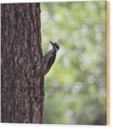 Woodpecker In New Mexico Wood Print