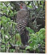 Woodpecker In The Apple Tree Wood Print