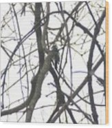 Woodpecker In The Forest Wood Print