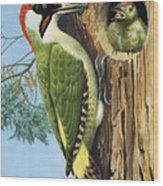 Woodpecker Wood Print by RB Davis