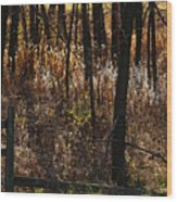 Woods - 2 Wood Print by Linda Shafer