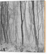 Woods In Mist, Stagshaw Common Wood Print