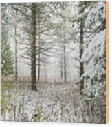 Woods In Winter At Retzer Nature Center  Wood Print