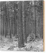 Woods In Winter, Slaley Wood Print