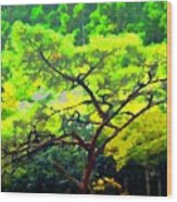 Woods Wood Print