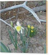 Woodsy Narcissus Wood Print
