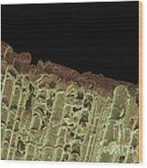 Woodwind Reed, Sem Wood Print
