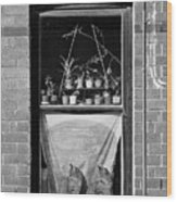 Woolloomolloo Window With Cats Wood Print by Barry Culling