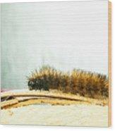 Wooly Worm Wood Print