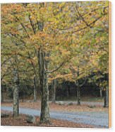 Words End State Park Drive Wood Print